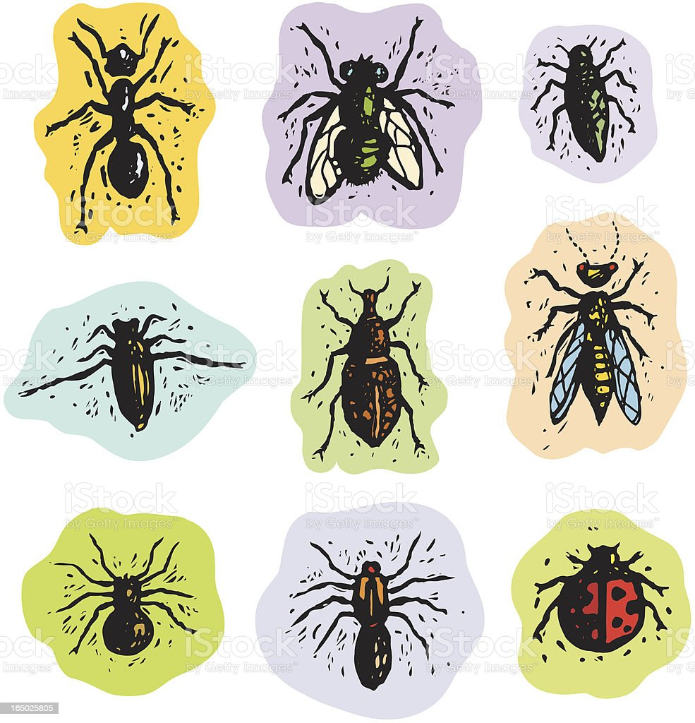 Insects and arachnids royalty-free stock vector art