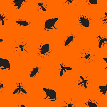 Insects and rodents