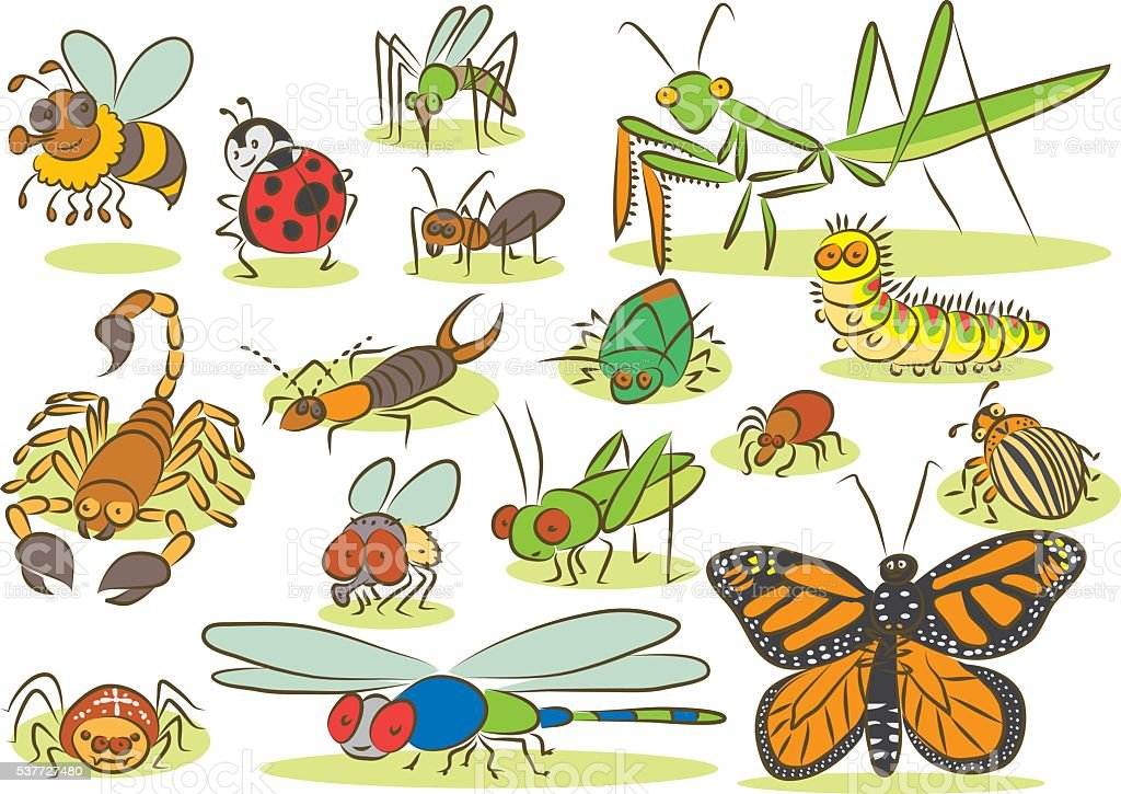 insects vs animals When people say 'wildlife', they usually mean 'animals' (and sometimes birds)   so to prove that arthropods (i'm just going to focus on insects here) are not all   ecosystem services vs disservices: it's really not that simple.