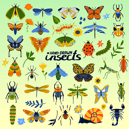 Insects collection of beetles, bee, ladybug, butterfly and bugs cartoon poster for insectology vector illustration.