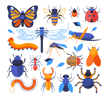 Insects collection - set of flat design style elements