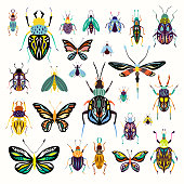 Insects collection with decorative butterflies and beetles isolated on white