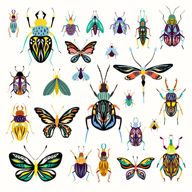Insects collection Insects collection with decorative butterflies and beetles isolated on white beetle stock illustrations