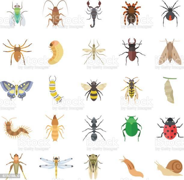 Insects color vector icons vector id673016620?b=1&k=6&m=673016620&s=612x612&h=7ksshcilm3jy6vgtcfosfbr8rjqx1itsrushjshrwna=