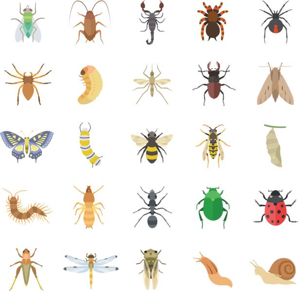 insects color vector icons - bugs stock illustrations
