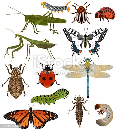 Collection of insects in colour image: grasshopper, caterpillar, mantis, ladybug (ladybird), butterfly (swallowtail, machaon, monarch), dragonfly, colorado beetle, june bug