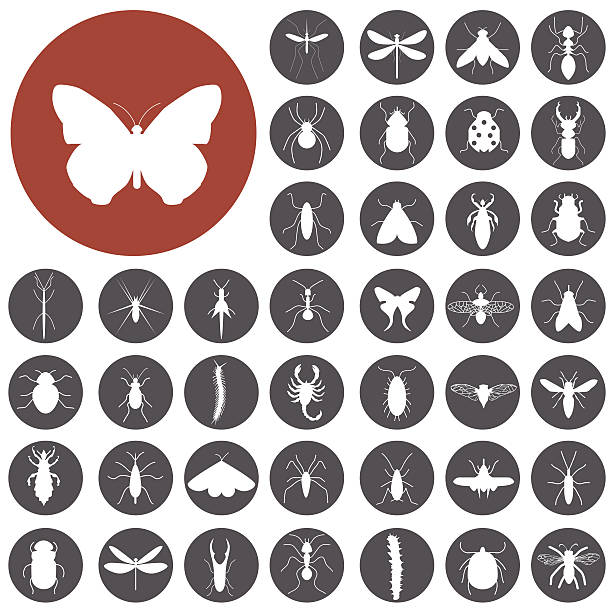 Insekten icon-set.  Illustration eps10 – Vektorgrafik