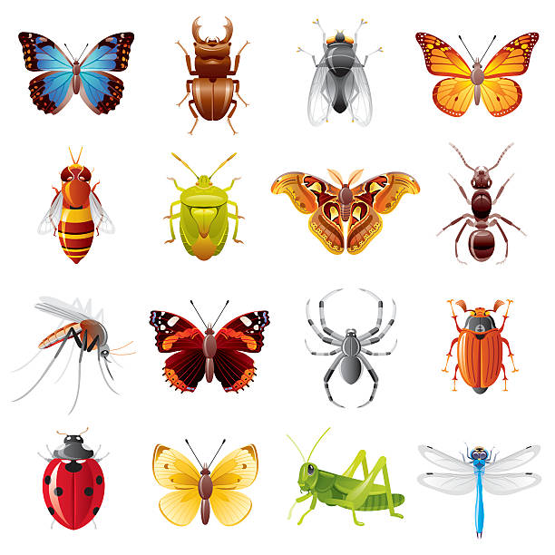 insects icon set - bugs stock illustrations, clip art, cartoons, & icons