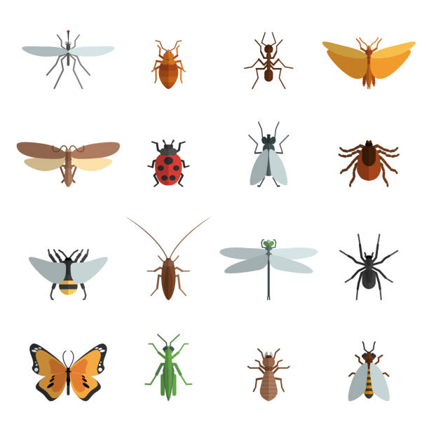 insects icons flat Insect icon flat set with mosquito grasshopper spider ant isolated vector illustration insects stock illustrations