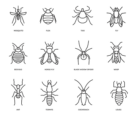 Insects icons set