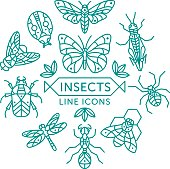 Set of vector outline insects icons arranged in circle