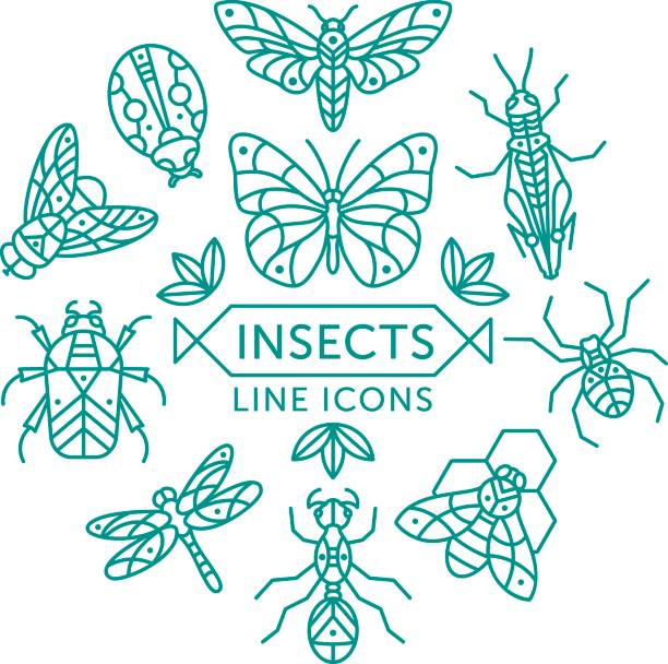 Insects line icons Set of vector outline insects icons arranged in circle butterfly insect stock illustrations