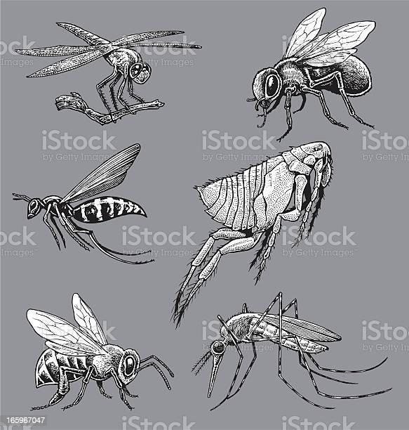 Insects mosquito wasp bee fly flea dragonfly vector id165967047?b=1&k=6&m=165967047&s=612x612&h=ww4dk3tfbtyu5mselwrhomggvdbrggsqoqy1y8qdqfi=