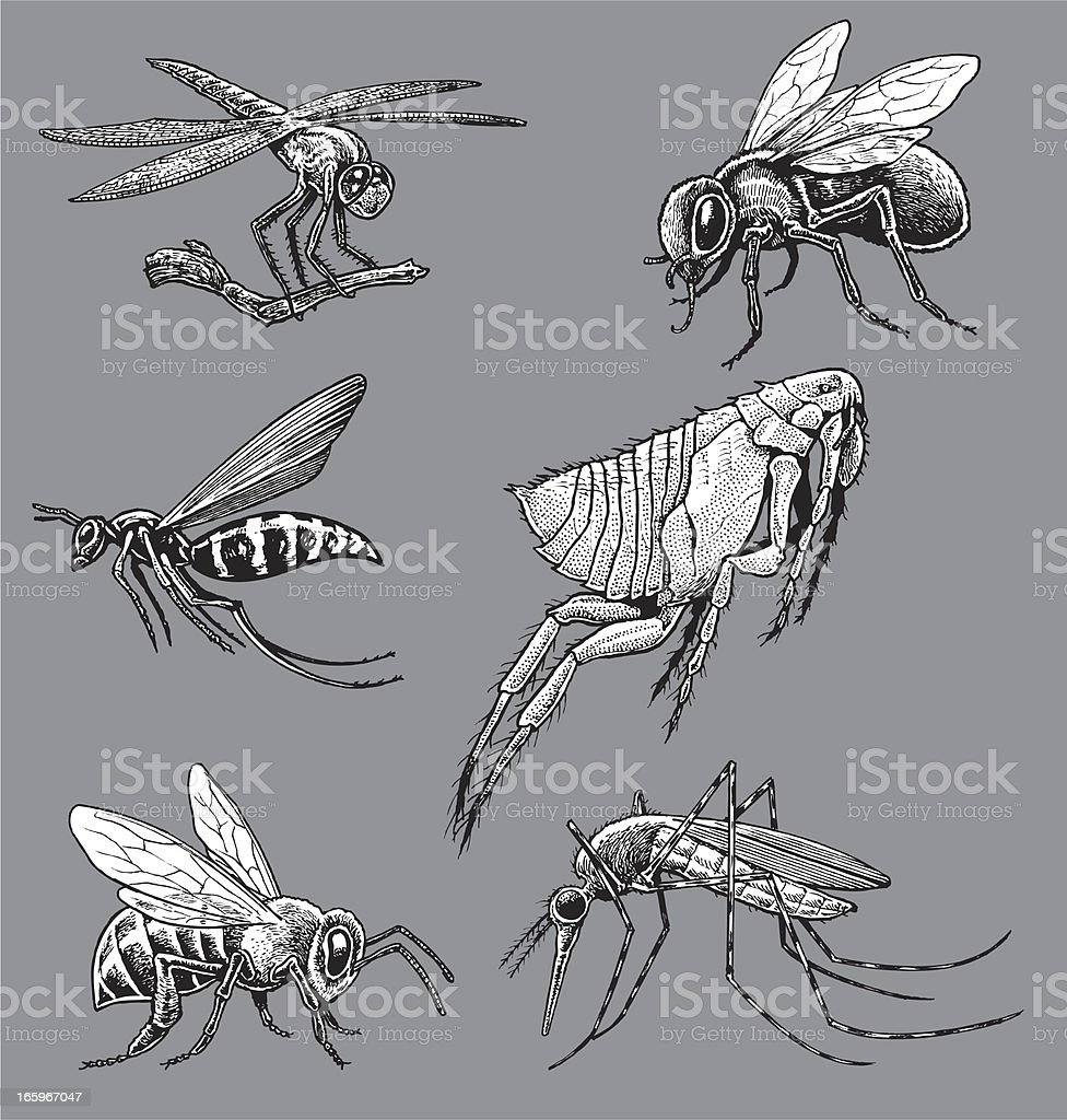 Insects - Mosquito, Wasp, Bee, Fly, Flea, Dragonfly vector art illustration