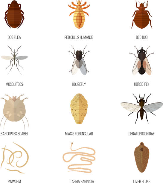 Insects parasite vermin nature pest beetle danger animal repellent wildlife disease bug vector illustration Insects parasite vermin nature pest beetle danger animal repellent wildlife disease bug vector illustration. Verminous parasitism zoo poison mosquito. parasitic stock illustrations