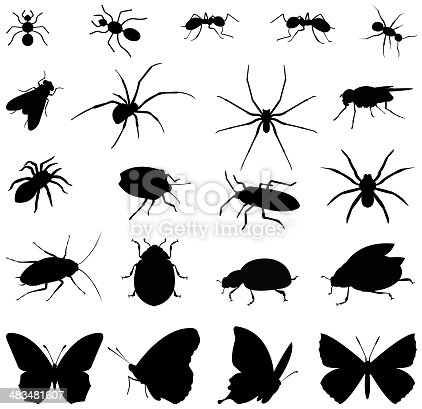vector file of  insects silhouette