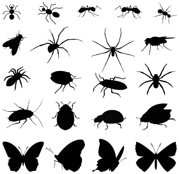 곤충 실루엣 - 곤충 실루엣 stock illustrations