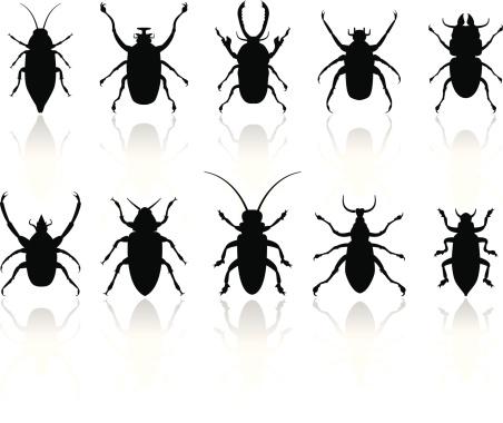 Insekten Silhouetten Set Stock Vektor Art und mehr Bilder von Aggression