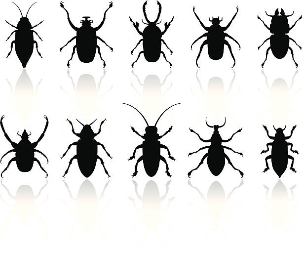 Insects silhouettes set  arachnid stock illustrations