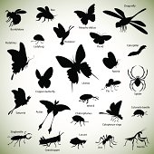 Insects silhouettes