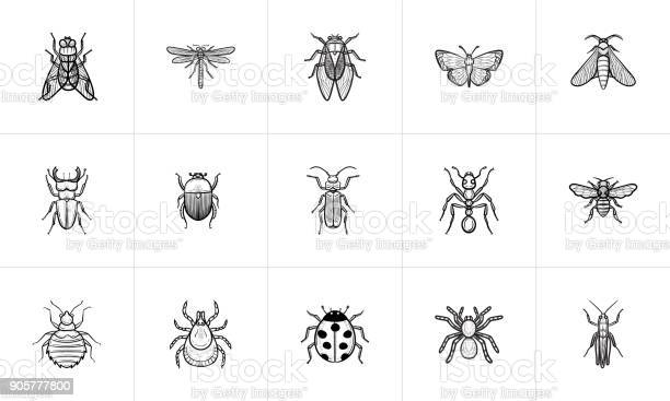 Insects sketch icon set vector id905777800?b=1&k=6&m=905777800&s=612x612&h=cttdrp7fi2gk8ug2niiovrhdbcl9g9o8u0 laimrez8=
