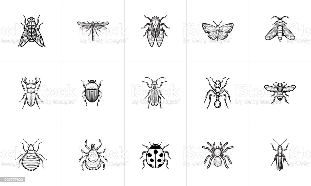 Insects sketch icon set vector art illustration