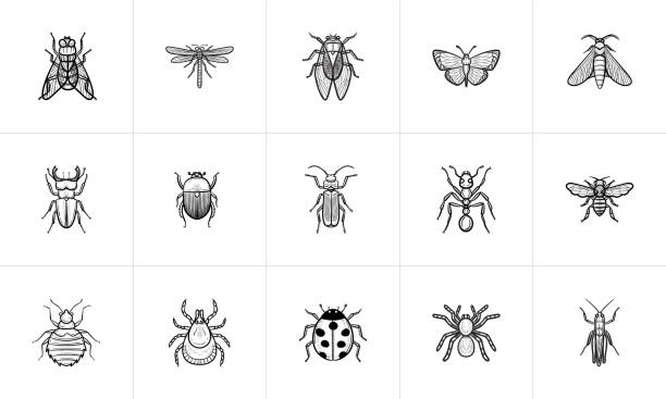 insects sketch icon set - bugs stock illustrations, clip art, cartoons, & icons