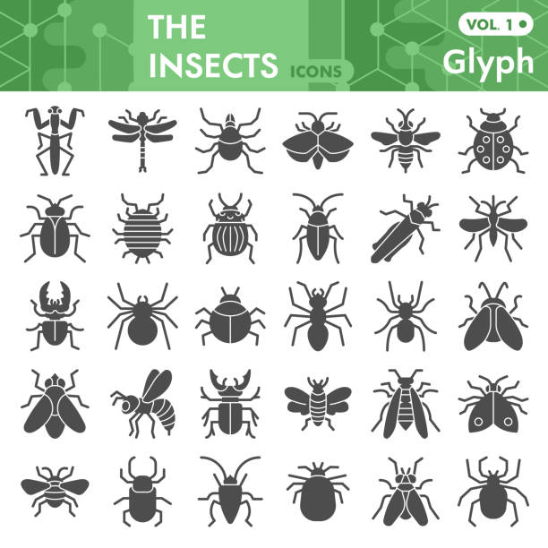 Insects solid icon set, bugs, beetles, termites symbols collection or sketches. Insects silhouettes glyph style signs for web and app. Vector graphics isolated on white background. Insects solid icon set, bugs, beetles, termites symbols collection or sketches. Insects silhouettes glyph style signs for web and app. Vector graphics isolated on white background insects stock illustrations