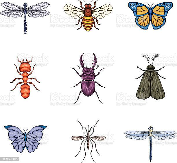 Insects vector id165626022?b=1&k=6&m=165626022&s=612x612&h=1hvwm4we5uygzrfp0omuqolbelc qrzw8pewb8arh7q=