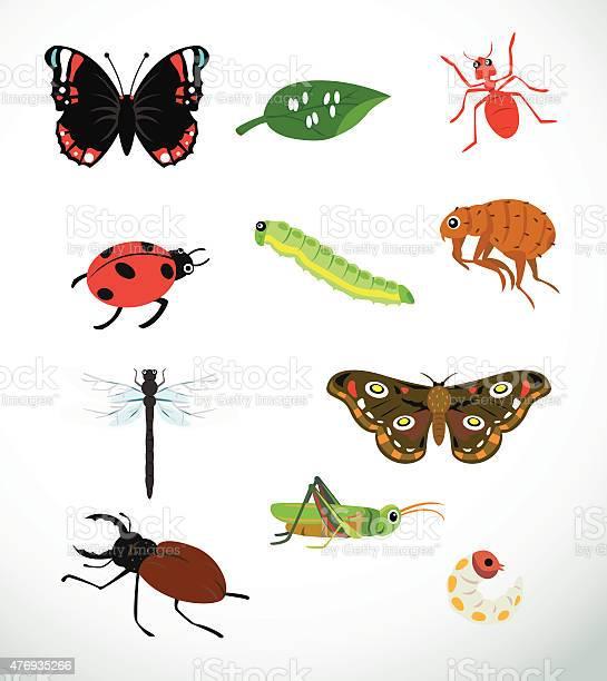 Insects vector id476935266?b=1&k=6&m=476935266&s=612x612&h=8yabltfei 05h4gayamnnq4mrodaa9qgqmkj5znthdg=