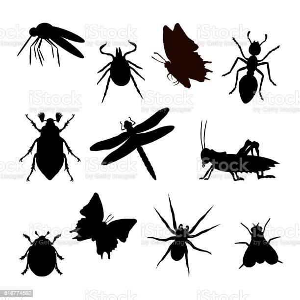 Insekt silhouette schwarz vector id816774562?b=1&k=6&m=816774562&s=612x612&h=apvz3rhvejls8ytgqhsefygnsmc7vkrczstvcm3bcfg=
