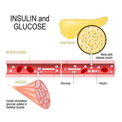 insulin and glucose