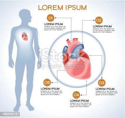 Interne Menschliche Organ Herzen Stock Vektor Art und mehr Bilder ...