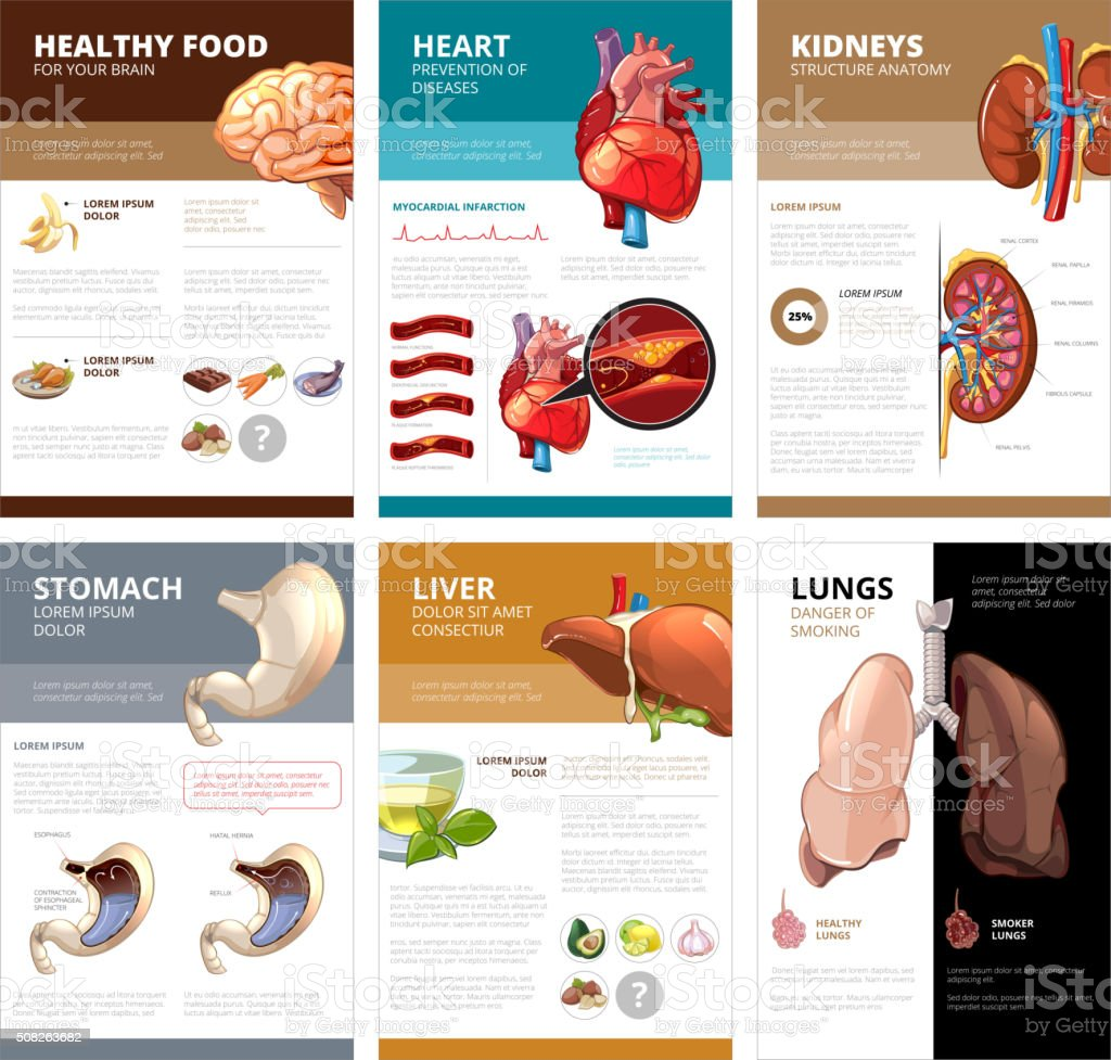 Internal human organs chart diagram infographic. Vector brochure template vector art illustration