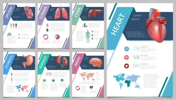 Internal human organs infographic spleen vector art illustration