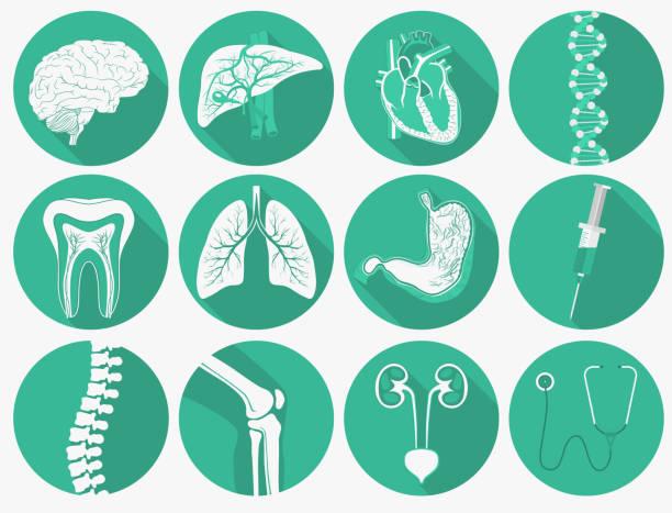 bildbanksillustrationer, clip art samt tecknat material och ikoner med inre mänskliga organ set och medicinska instrument. vektor - kardiolog