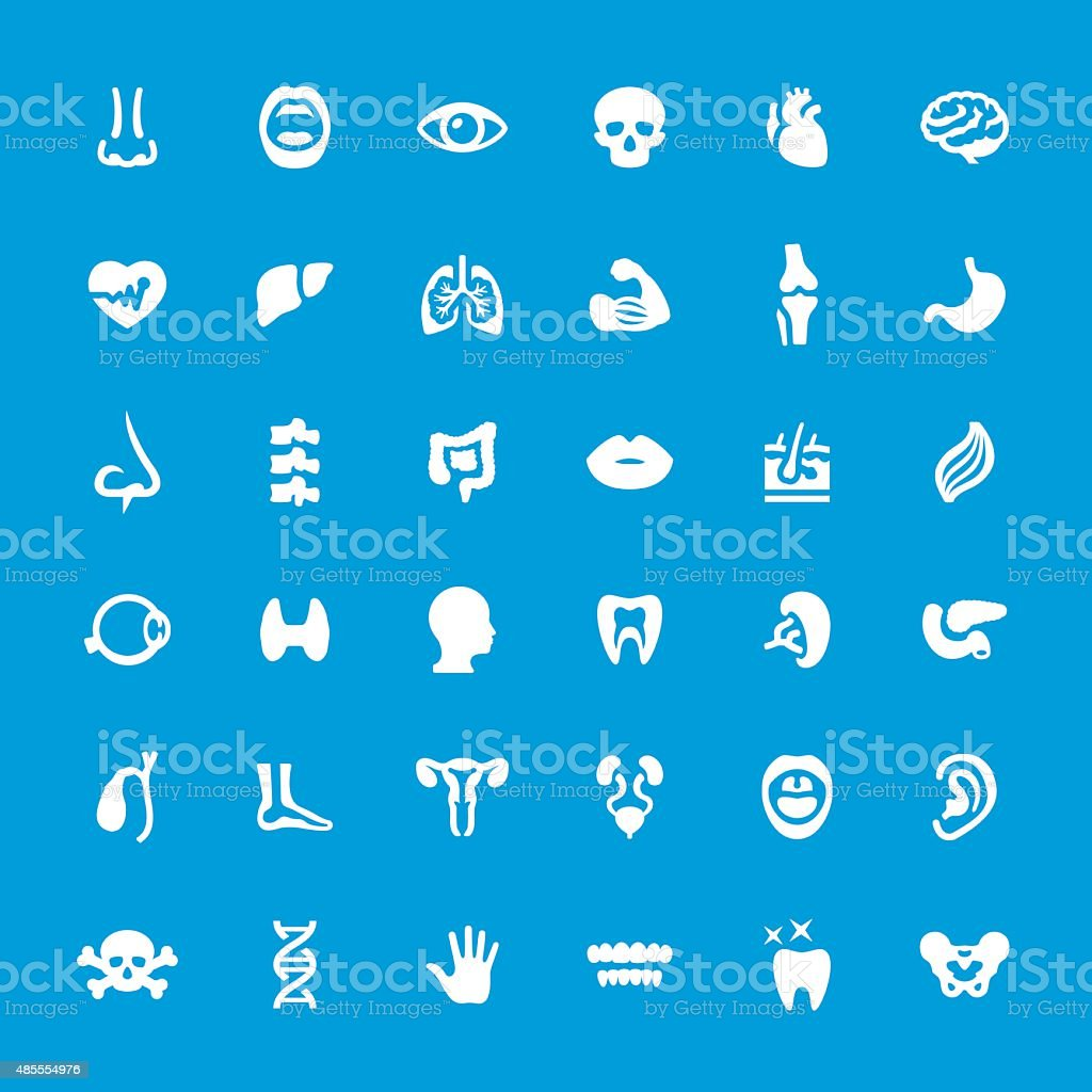 Internal Organ Anatomy vector icons set vector art illustration