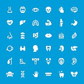 Internal Organ Anatomy vector icons set