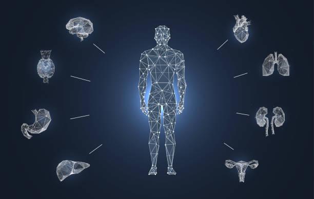 illustrazioni stock, clip art, cartoni animati e icone di tendenza di organi interni basso modello banner poli - il corpo umano