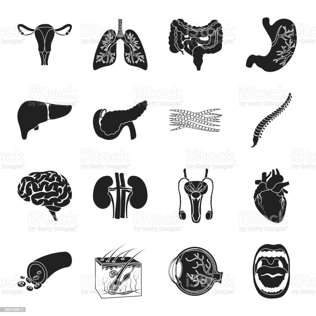 Internal organs of a human black icons in set collection for design. Anatomy and medicine vector symbol stock web illustration. royalty-free internal organs of a human black icons in set collection for design anatomy and medicine vector symbol stock web illustration stock vector art & more images of abdomen