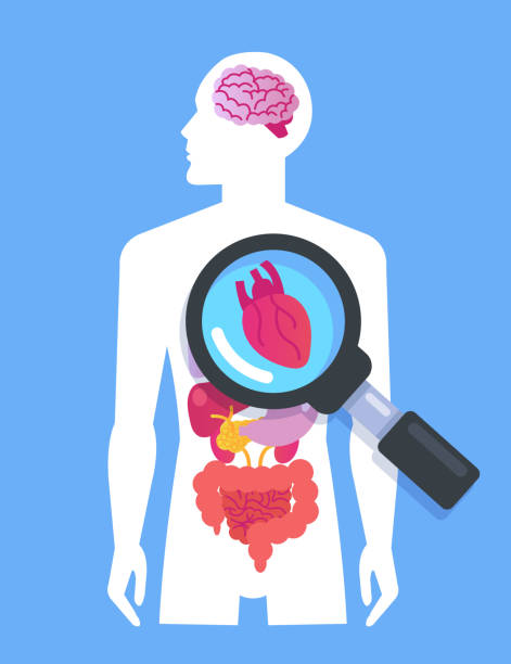 Internal organs on human body man banner. Medicine researching concept. Vector flat cartoon graphic design isolated isolated illustration vector art illustration