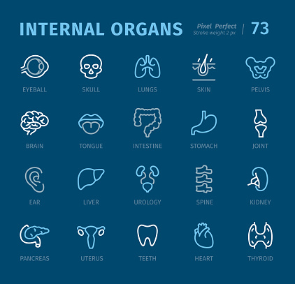 Internal Organs - Outline icons with captions