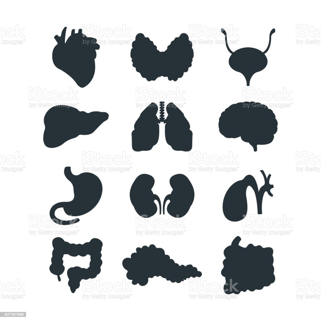 Internal organs silhouette vector illustration. vector art illustration