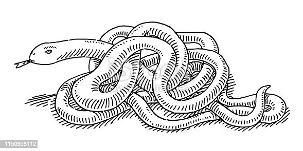 Hand-drawn vector drawing of an Intertwined Snake. Black-and-White sketch on a transparent background (.eps-file). Included files are EPS (v10) and Hi-Res JPG.