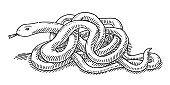 Intertwined Snake Drawing