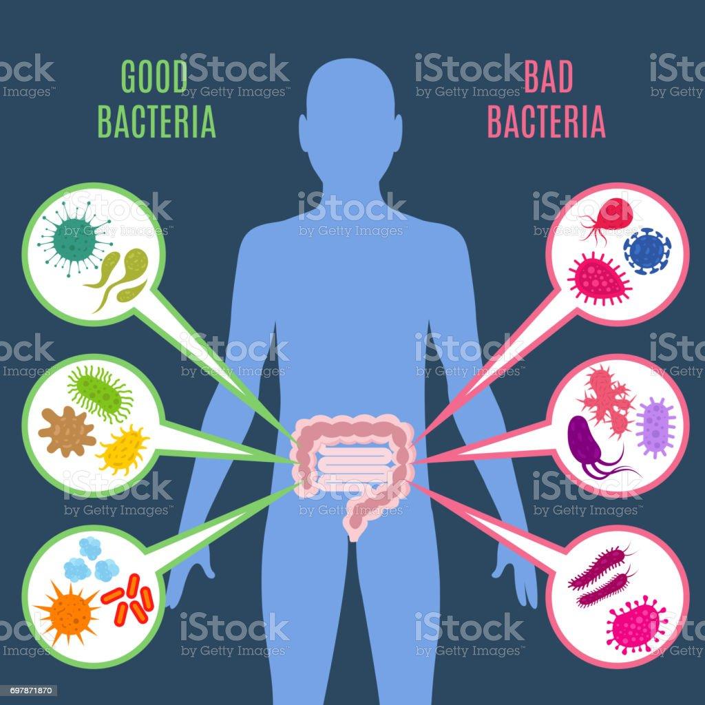 Intestinal flora gut health vector concept with bacteria and probiotics icons - Royalty-free Abdomen stock vector