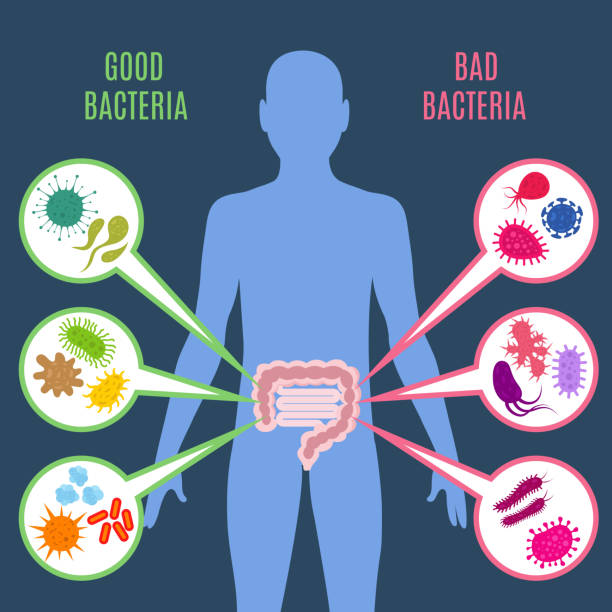 Intestinal flora gut health vector concept with bacteria and probiotics icons Intestinal flora gut health vector concept with bacteria and probiotics icons. Human flora good and bad microorganism illustration bacterium stock illustrations