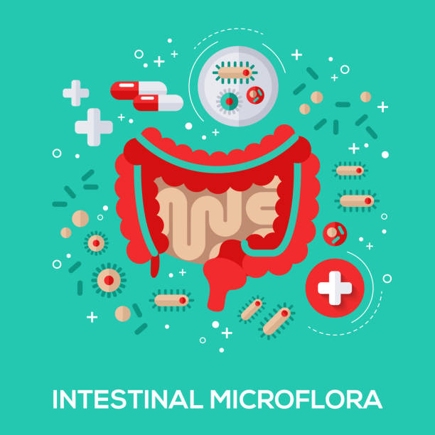Intestinal microflora flat icons concept. Intestinal microflora flat icons concept. Vector illustration. Intestine and bacterium, pills and tablet for proper digestion. abdomen stock illustrations