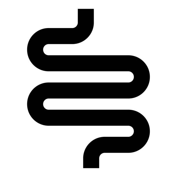 Intestine or bowels icon black color illustration flat style simple image Intestine or bowels icon black color vector illustration flat style simple image abdomen stock illustrations