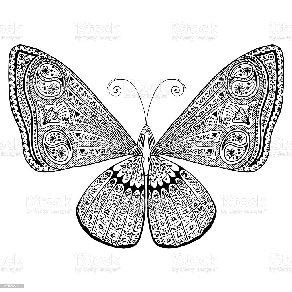 Intricate Detailed Butterfly Adult